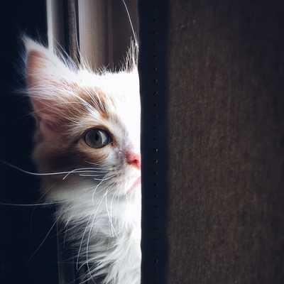 Cat Whatsapp Dp Images